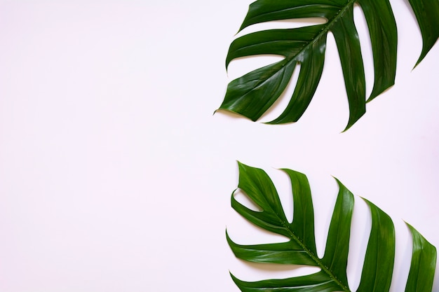 Green sugarcane leave isolated over white background with copy space. Premium Photo