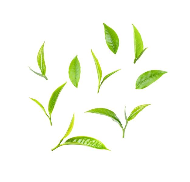 Green tea leaf on white background Premium Photo