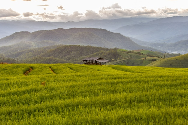 Green terraced rice field in pa pong pieng Premium Photo