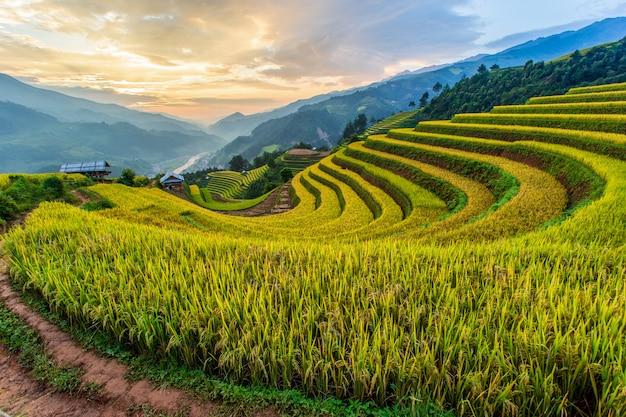 Green terraced rice fields at mu cang chai Premium Photo