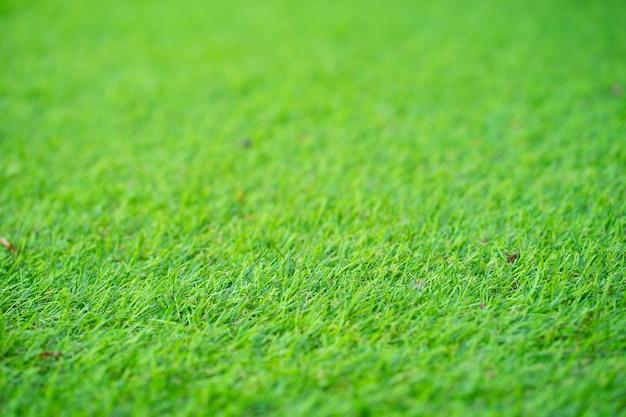 Green, texture, background, grass in sunlight. as background. Premium Photo