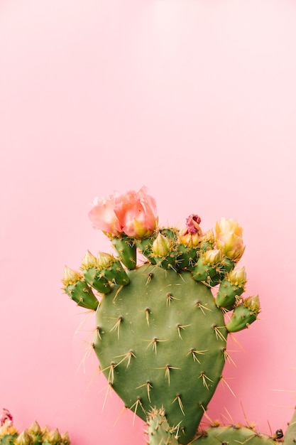 Green thorny cactus against pink background Free Photo