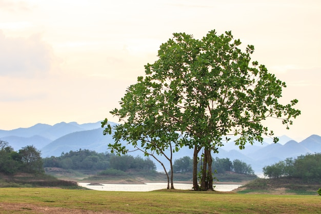 Green tree on background Premium Photo