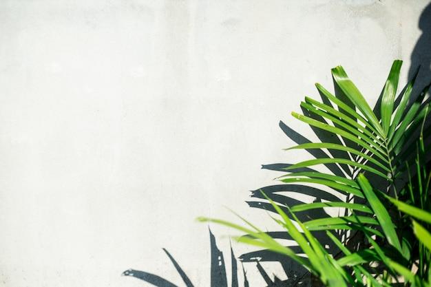 Green tree on a white background Premium Photo