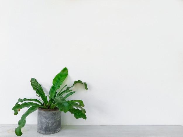 Green tree with white background Premium Photo