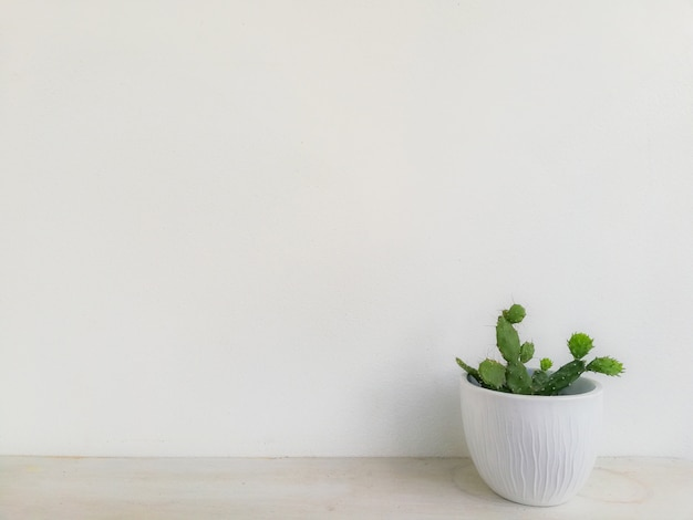 Green tree with white wall background Premium Photo