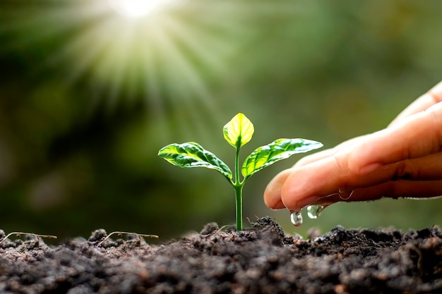 Green trees growing on the ground and agriculture hands that water the trees, concept of growing trees and preserving sustainable nature. Premium Photo
