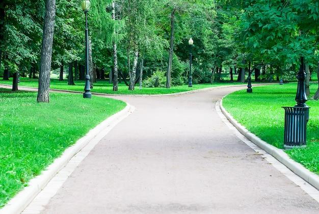 도시 공원의 푸른 나무 프리미엄 사진