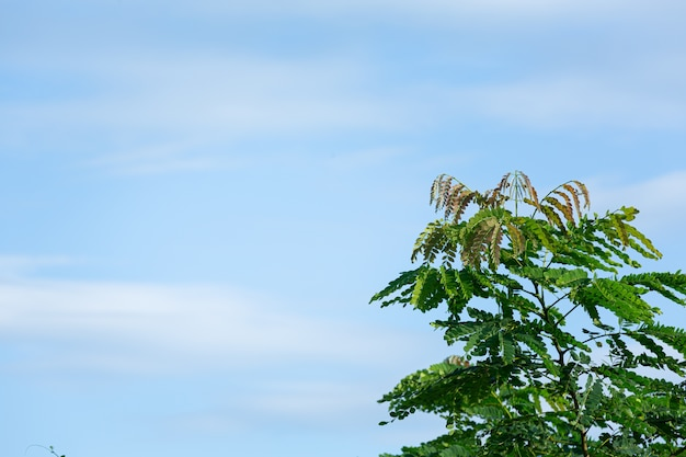 Green treetops in the sky, beautiful light. Free Photo