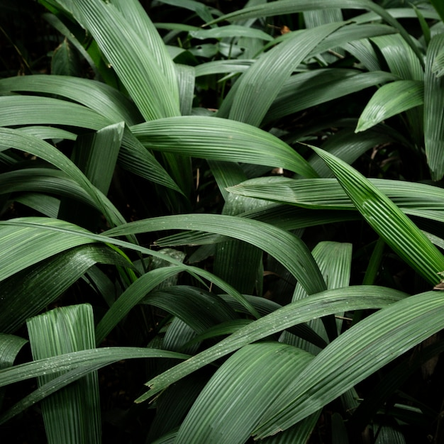 Green tropical leaves background Free Photo