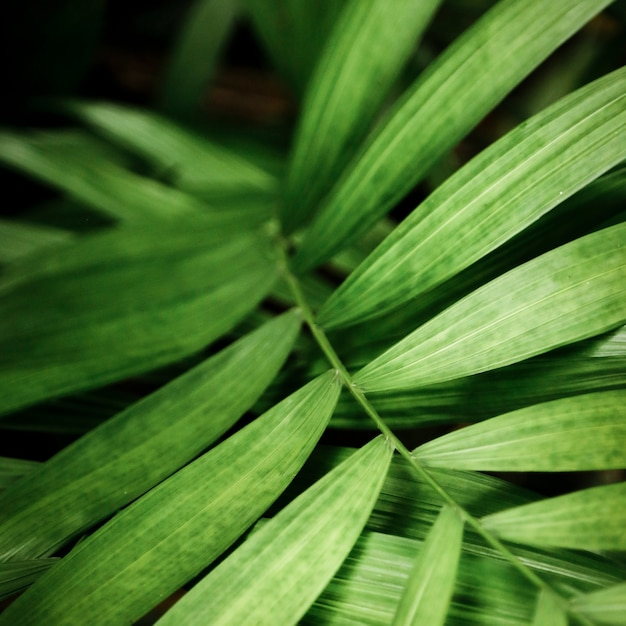 Free Photo Green Tropical Leaves Macro Photography Choose from over a million free vectors, clipart graphics, vector art images, design templates, and illustrations created by artists worldwide! green tropical leaves macro photography