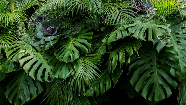 Premium Photo Green Tropical Leaves Of Monstera Fern And Palm Fronds The Rainforest Foliage Plant Bush Floral Arrangement On Dark Background Natural Leaf Texture Nature Background Beautiful paphiopedilum orchids and leaves of aucuba. https www freepik com profile preagreement getstarted 9145070