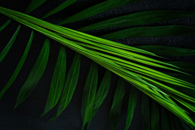 Premium Photo Green Tropical Palm Leaves On A Dark Background Tropical Forest Natural Green Pattern 116,000+ vectors, stock photos & psd files. https www freepik com profile preagreement getstarted 9051889