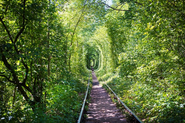 Green tunner in forest. love place. Premium Photo