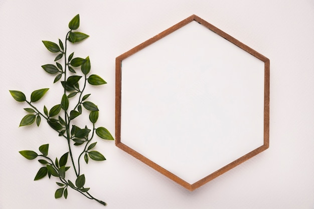 Green twig with leaves near the hexagon wooden frame on white backdrop Free Photo