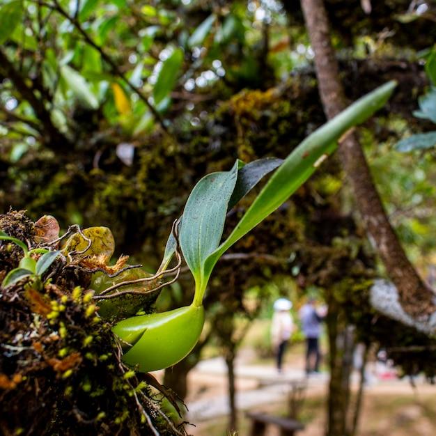 복사 공간 포리스트의 트렁크에 녹색 야생 난초. 프리미엄 사진