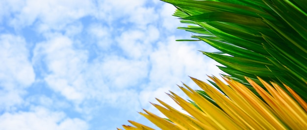 Green and yellow leaves in blue sky background. Premium Photo