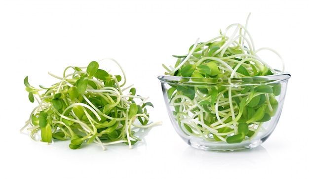 Green young sunflower sprouts isolated on white background Premium Photo
