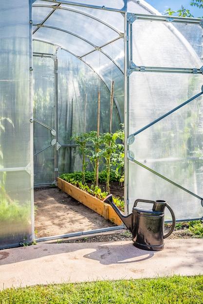 Greenhouse in back garden with open door and bailer Premium Photo
