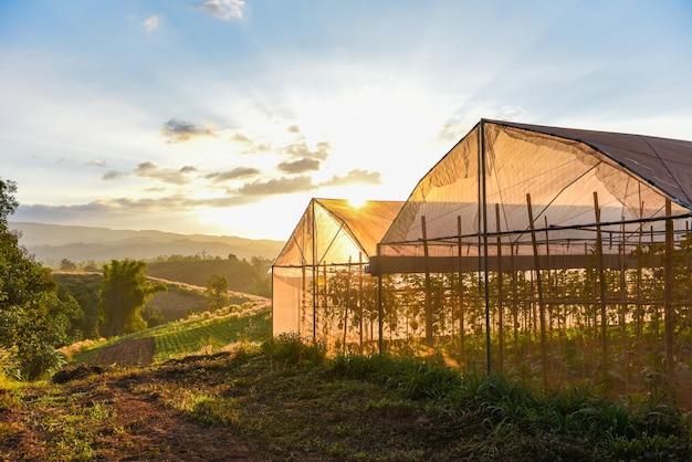 Тепличные овощные растения и садоводство, сельскохозяйственная продукция, крыши, сельское хозяйство с закатом Premium Фотографии