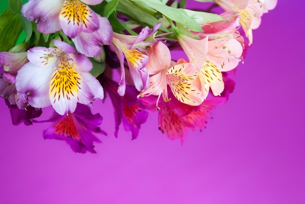 Greeting card with flowers. banner with alstroemeria flowers on a neon background. Premium Photo