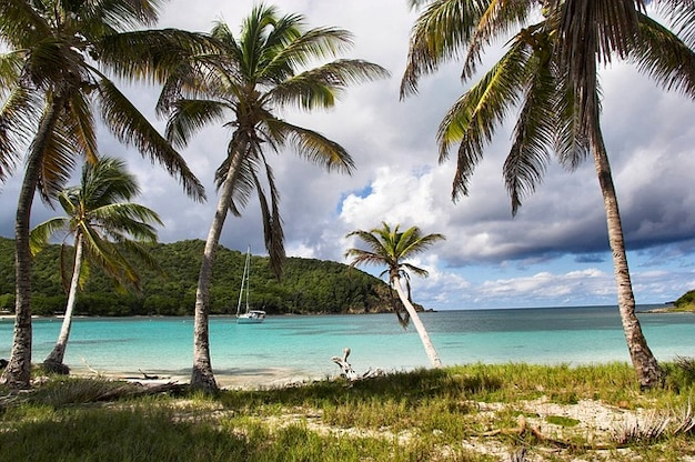 Grenadines anchorage caribbean Free Photo