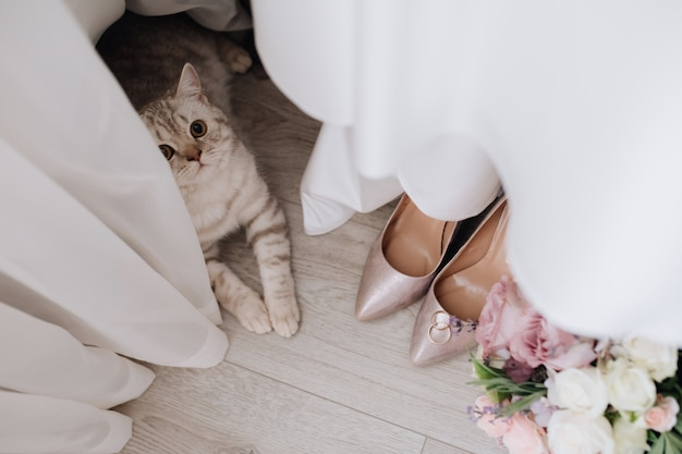 Grey cat near curtains, wedding rings, bouquet and shoes on the floor Free Photo