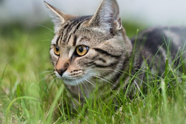 ぼやけた背景で草の上に座っている灰色の飼い猫 無料写真