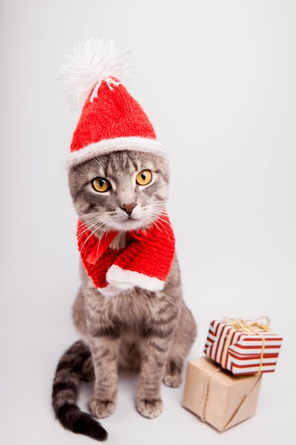 Grey tabby cat wears santa's hat and surrounded with presents on white background. Premium Photo