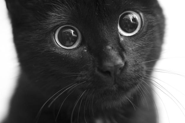 Primo piano in scala di grigi colpo di un gatto nero con occhi carini Foto Gratuite