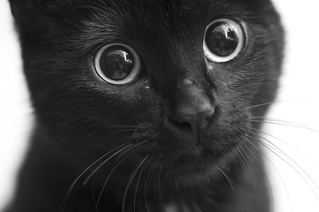 かわいい目を持つ黒猫のグレースケールのクローズアップショット 無料写真