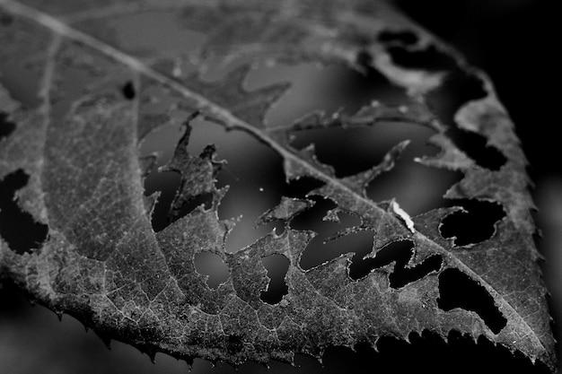 표면에 무늬가있는 구멍이있는 회색조 잎 무료 사진