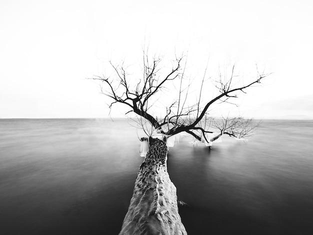 日光の下で海に裸の枝を持つ木のグレースケール 無料写真