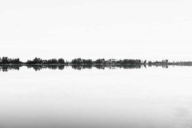 Оттенки серого ряда деревьев, отражающихся в воде Бесплатные Фотографии