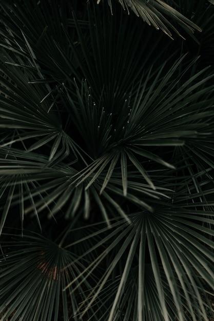 Greyscale shot of beautiful palm tree leaves Free Photo
