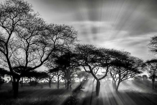 日没時のサバンナ平原の木々のグレースケールショット 無料写真