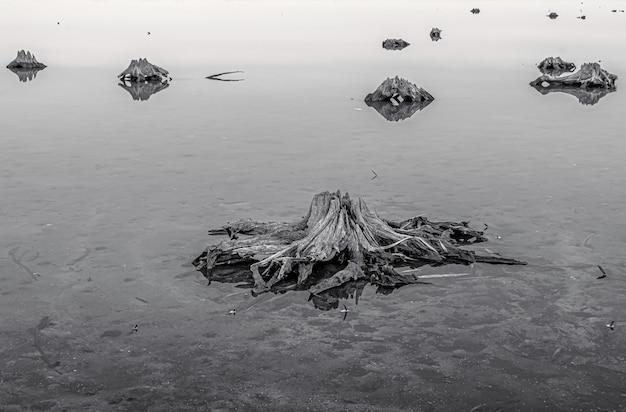 Colpo in scala di grigi delle radici di vecchi alberi sul terreno ghiacciato Foto Gratuite