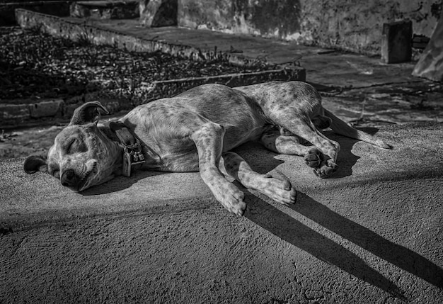 Greyscale shot of a tired homeless cute dog sleeping on the street in the afternoon Free Photo