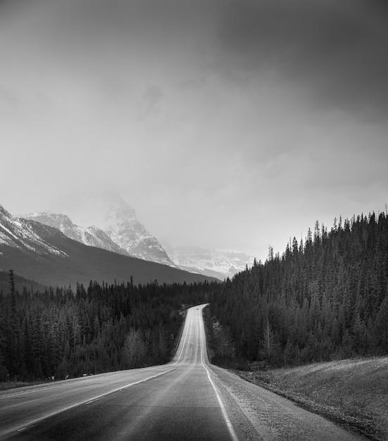 Вертикальный снимок дороги посреди леса под чистым небом в оттенках серого Бесплатные Фотографии