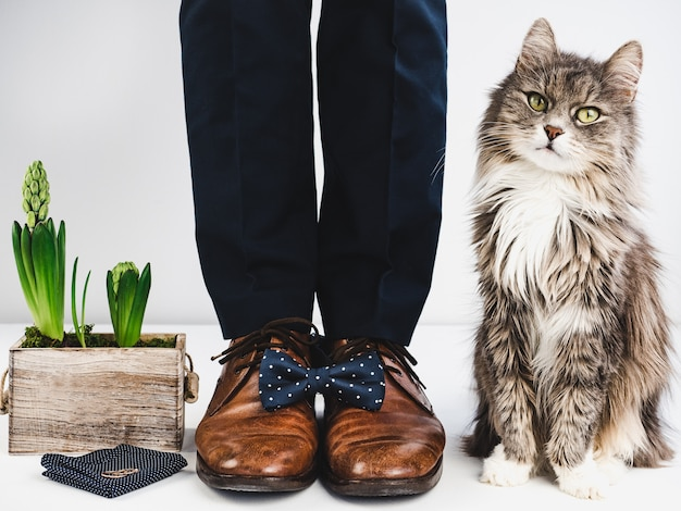 Groom, rings, flower, bow tie and cute kitten Premium Photo