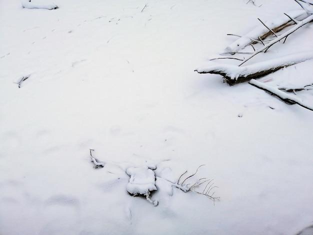 ノルウェーのラルヴィークの枝に覆われた地面と日光の下の雪 無料写真