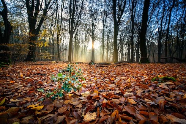 秋の森の中、日光の下で木々に囲まれた乾燥した葉で覆われた地面 無料写真