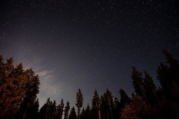 Vista a terra di splendidi alberi e il cielo Foto Gratuite