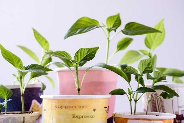 Group of cardboard disposable cups with plants Premium Photo