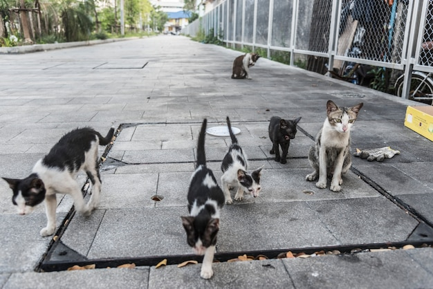 Group of cute street cats and kittens Free Photo