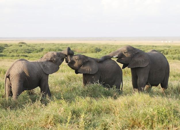 アフリカ、ケニアのアンボセリ国立公園の象のグループ 無料写真