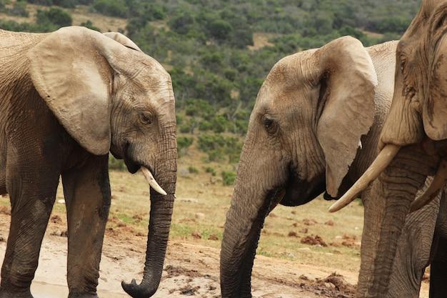 ジャングルの真ん中にある水たまりの近くで遊んでいる象のグループ 無料写真