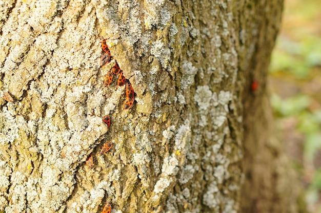 Группа жуков на стволе дерева с лишайниками Бесплатные Фотографии