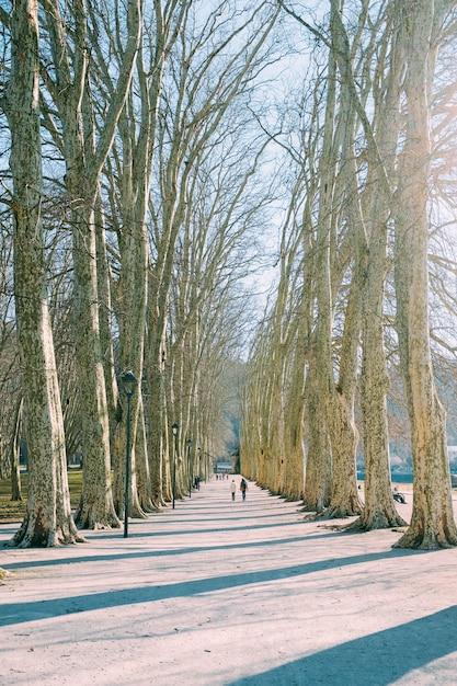 昼間に裸の木々に囲まれた経路に沿って歩く人々のグループ 無料写真