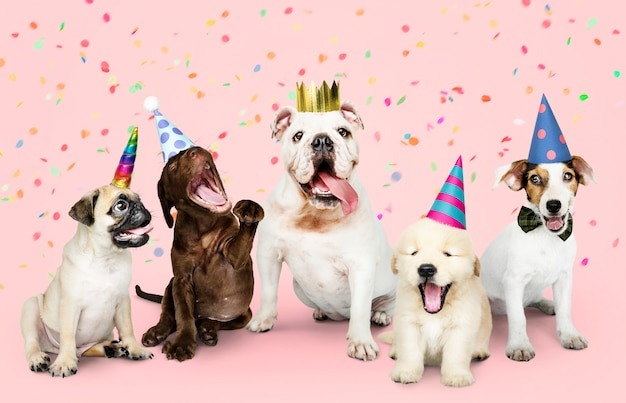 Group Of Puppies Celebrating A New Year Photo Free Download